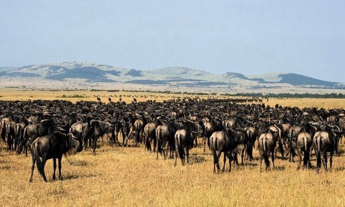 Serengeti-National-Park1