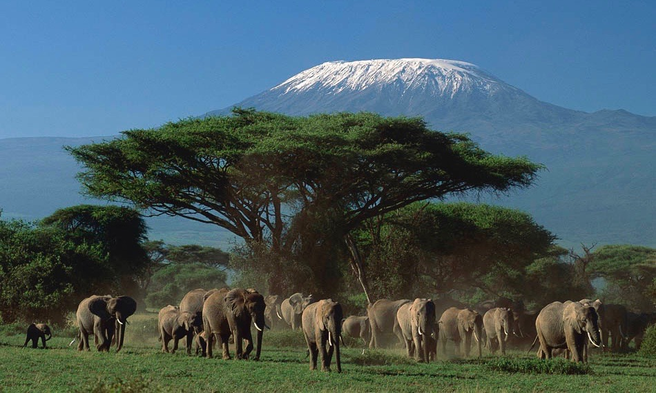 amboseli-national-parkel_1-1