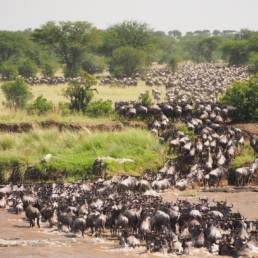 Great Migration safari in Africa